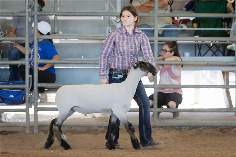 Read the full story about students place at Brazoria County Fair.